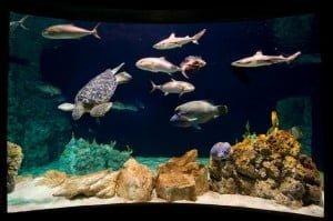 Aquario Livorno ph-merlofotografia 120