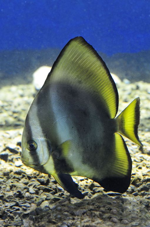 Acquario di cala gonone secondo compleanno della for Acquario per pesci