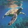 """Acquario di Livorno: eventi speciali per la """"Giornata Mondiale degli Oceani"""""""