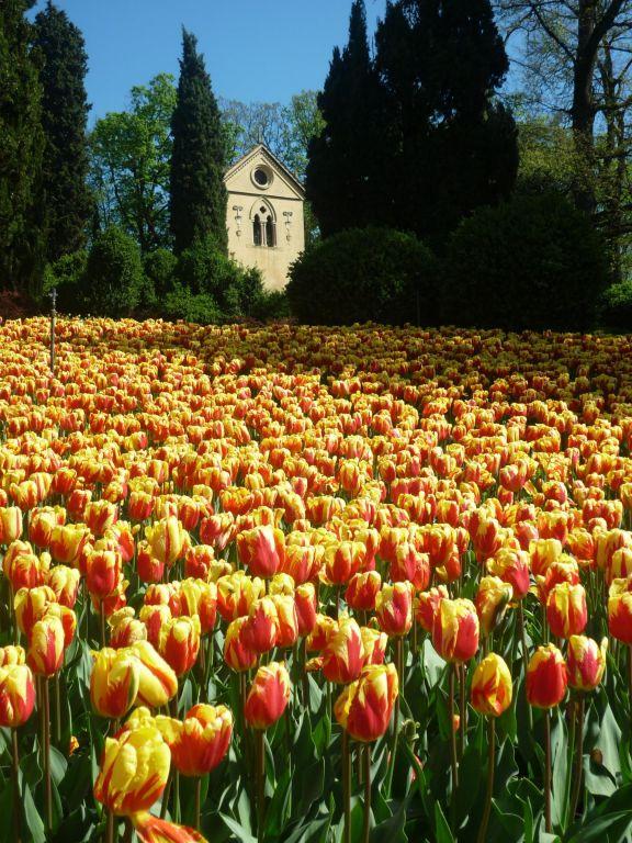 Parco giardino sigurt riapertura l 39 8 marzo 2014 parksmania - Parco giardino sigurta valeggio sul mincio vr ...