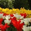 """Parco Giardino Sigurtà: il video di """"Tulipanomania 2015"""""""