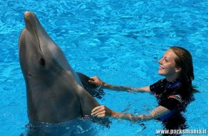 zoomarine_delfini parksmania