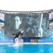 Sea World: le celebrazioni del 50° anniversario