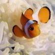 Acquario di Cattolica: la vasca di Nemo