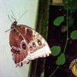 Casa delle Farfalle & Co: gli eventi del 20 e 21 aprile