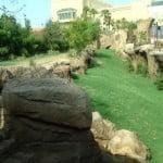 busch-gardens-africa-le-foto-di-cheetah-hunt
