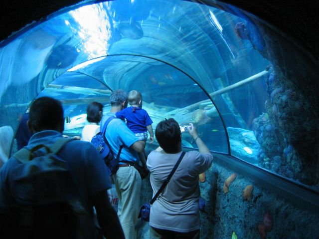 Sea Life Aquarium For Phoenix Parksmania