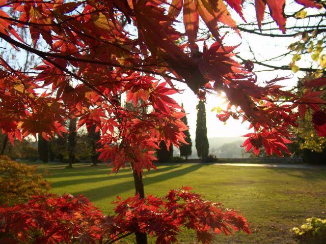 Parco giardino sigurt ultimo tour prima della chiusura for Giardino invernale