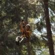 Jungle Raider Civenna: le novità 2009 del parco