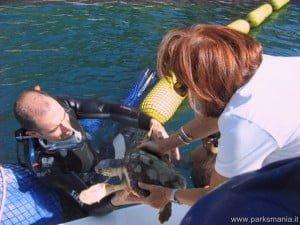 Acquario di cattolica tartarughe rilasciate in mare for Acquario x tartarughe