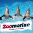 Zoomarine: ricerca personale stagione 2013