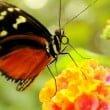 """Casa delle Farfalle & Co: evento """"Notte Rosa"""""""