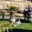 Safari Park: il parco è aperto tutti i giorni dal 15 marzo
