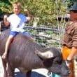 città domenica ranger - bisonte