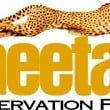 """Le Cornelle: """"Una giornata con i ghepardi"""" il 13 ottobre"""