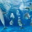 """Oltremare: il video integrale de """"La voce dei delfini"""""""