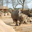 Zoom Torino: iniziative per la Giornata Mondiale del Rinoceronte
