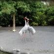 """Zoom Torino: il video della """"Danza delle Gru"""""""