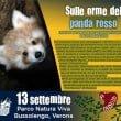 natura viva panda rosso 2014