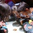 Gardaland SEA LIFE Aquarium - laboratori novembre (2)