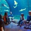 Lido di Jesolo_SEA_LIFE Aquarium_squali