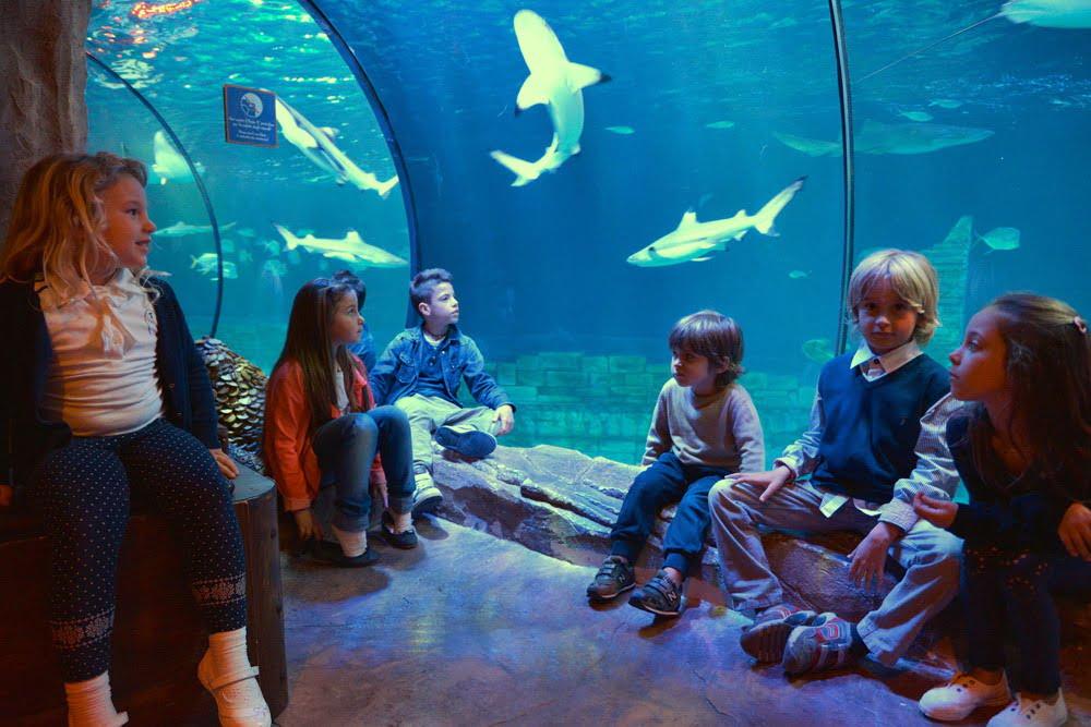 "Sea Life Jesolo: tre mesi all'insegna degli ""educational"" - Parksmania"