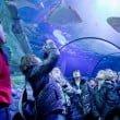 gardaland SEA LIFE Aquarium_17_squali