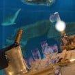 Acquario di Genova - cena squali san valentino 3