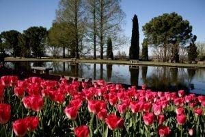 giardini sigurta tulipanomania (12)