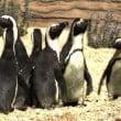 zoomarine pinguini 01