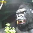 """Gardaland: il video storico (1992) di """"Safari Africano"""""""