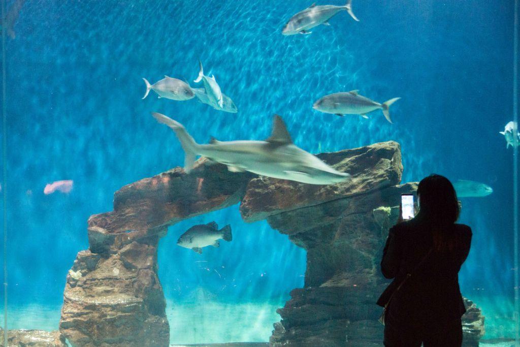 acquario di genova: iniziative di natale e capodanno - parksmania - Pacchetti Soggiorno Acquario Di Genova