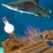 Acquario di Genova  cena squali san valentino