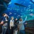 Sea Life Jesolo: gli squali diventano 12
