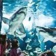 """Acquario di Cattolica: """"Notti con gli squali"""""""