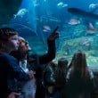 Jesolo SEA LIFE Aquarium_Festa della mamma 2016