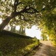 Parco Giardino Sigurtà: Autunno al parco