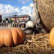 Miragica: Halloween al parco