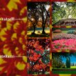 """Parco Giardino Sigurtà: i vincitori di """"Colori d'Autunno"""""""