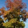 Parco Giardino Sigurtà: il 6 novembre si chiude la stagione