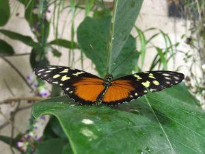 farfalle 144