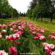 Parco Giardino Sigurtà: tra Tulipani, Rose ed Eventi