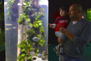 5_Gardaland SEA LIFE Aquarium - Amazzonia_piranha erbivoro_9417