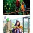 Zoomarine: Giornata Mondiale dei Pappagalli e del Gioco