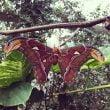 """Villa Garzoni: le farfalle della """"Collodi Butterfly House"""""""