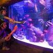 Gardaland Sea Life: iniziative di Carnevale