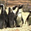 Zoomarine: la Giornata dei Pinguini