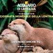 """Acquario di Cattolica: weekend """"Salva una Lontra"""""""