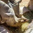 """Zoom Torino: """"Giornata Mondiale del Rinoceronte"""""""
