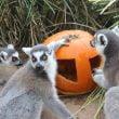 Zoom Torino: gli eventi di Halloween